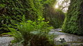 720_Prairie_Creek_Redwoods_State_Park_Fern_Canyon_resize